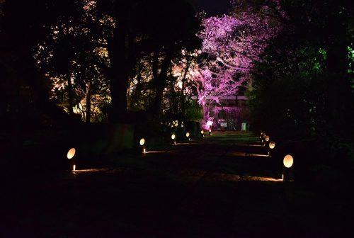 龍雲寺ライトアップイベント01