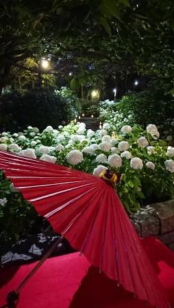 八景島シーパラダイス あじさい祭り01