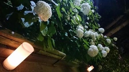 八景島シーパラダイス あじさい祭り03